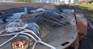 낚시터에서 숨어있던 4.3미터 거대 악어 발견